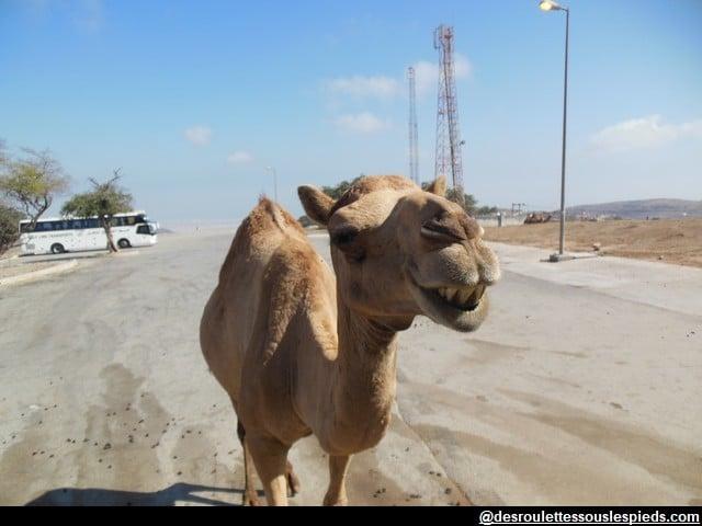 Dhofar-Chameau-tombeau-Job