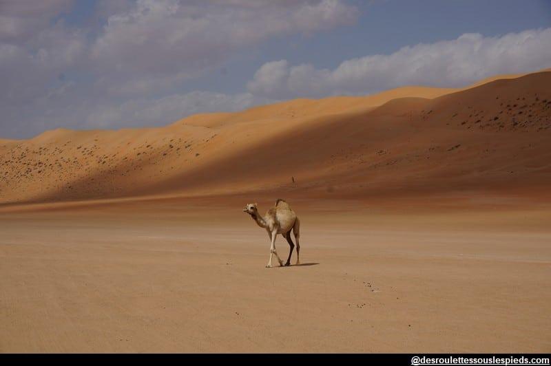 Visiter- Sultanat-Oman-désert