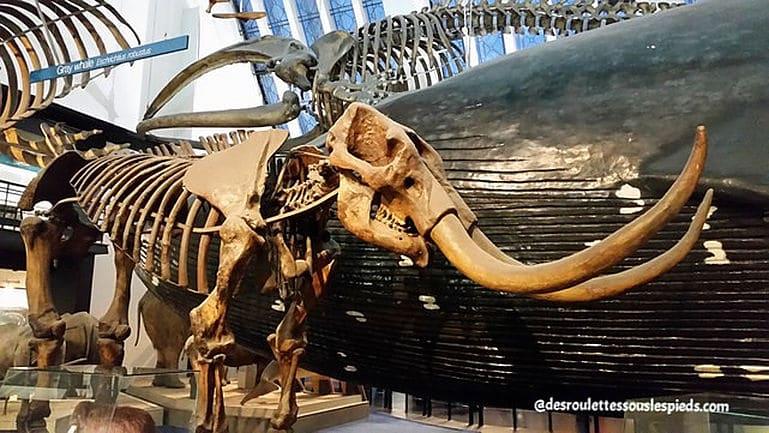 fêtes-fin-d'année-Londres-musée-histoire-naturelle