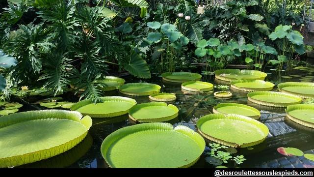 lotus-Kew-Gardens-Londres