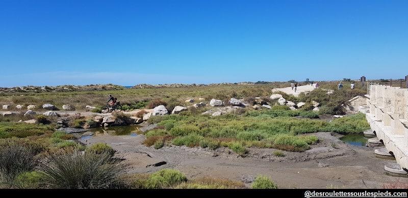 visiter la camargue à vélo accès à la plage
