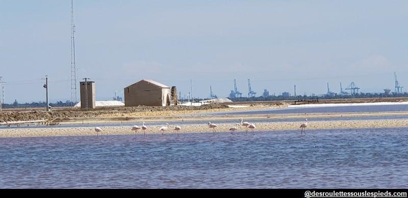visiter la camargue flamands roses au loin fos sur mer