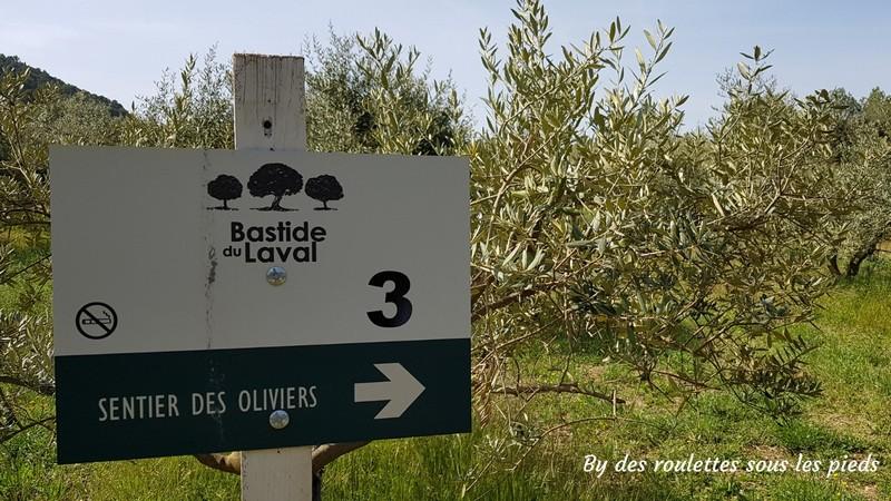 visiter une oliveraie en provence parcours fléché