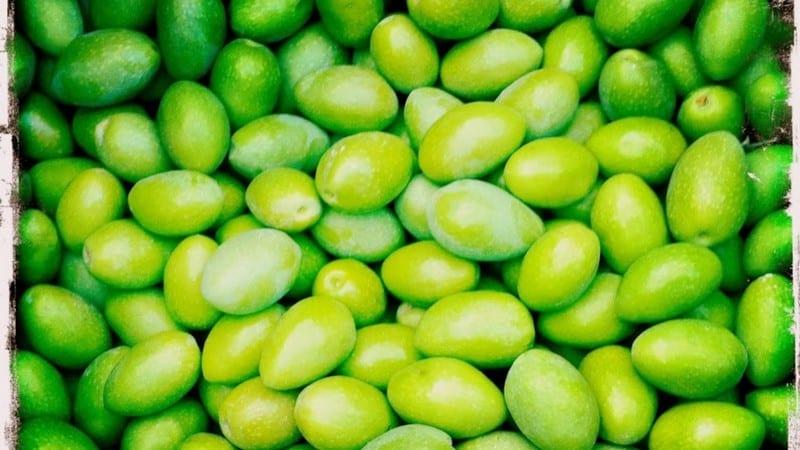 olives variété picholine