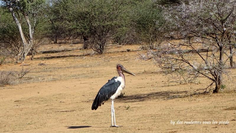 safaris en namibie