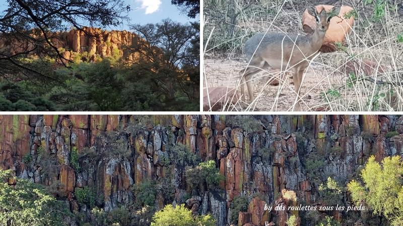 safaris en namibie plateau du waterberg