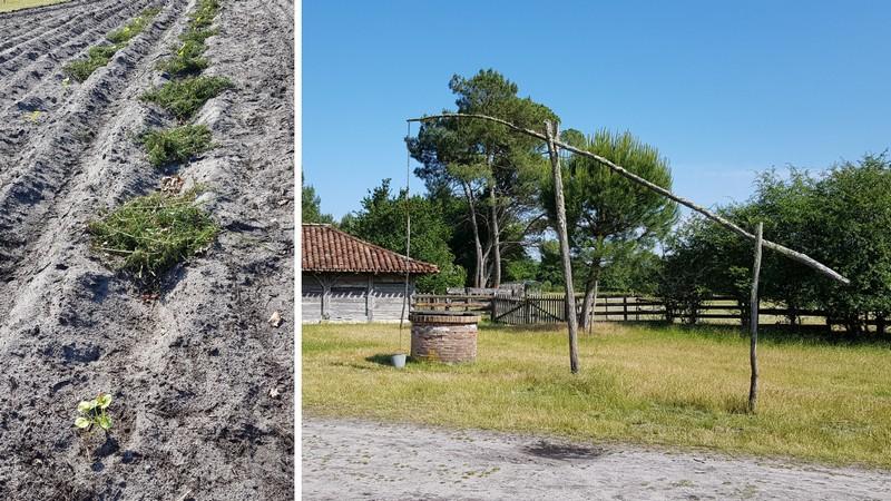 quoi faire dans les landes visiter l'écoquartier de Marquèze, son champ de seigle et son puits