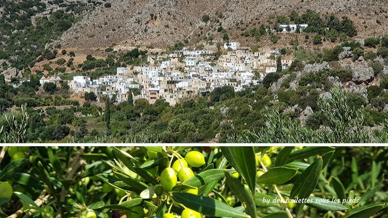 Visiter l'est de la crète pefki oliviers