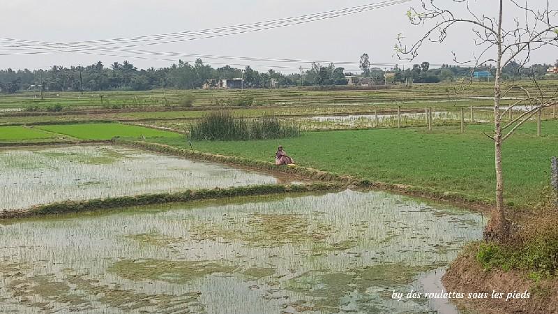 visiter la région de tanjore au tamil nadu rizières