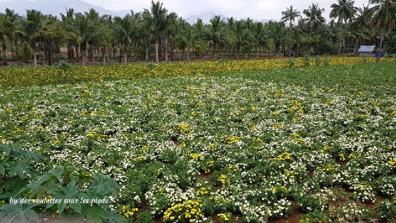 visiter le nord-ouest du tamil nadu fleurs de coton