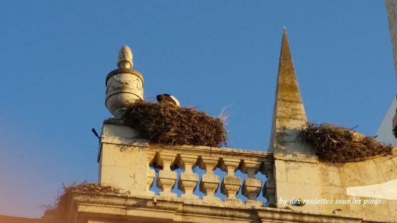 visiter Faro et sa région cigogne