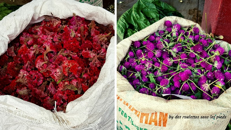 visiter le nord-ouest du tamil nadu crête de coq et fleurs de trèfles