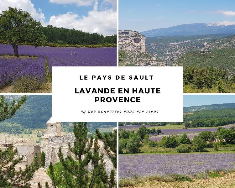 Floraison de la lavande à Sault : quand voir des champs de Lavande en Provence