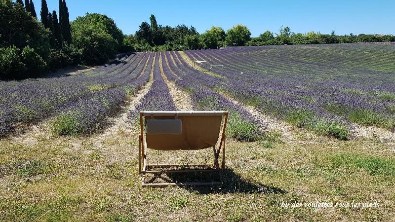 lavande à Aix en Provence repos