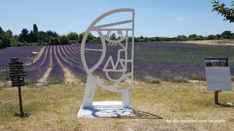 lavande à Aix en Provence ugo julien raynaud